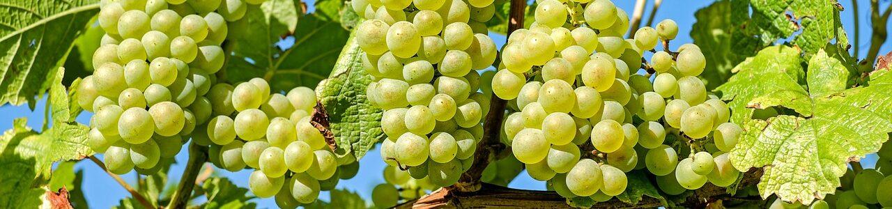 grapes-2656259_1280