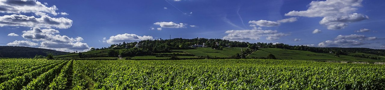 vines-2766552_1280
