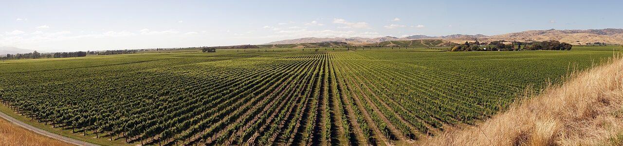 winegrowing-2151457_1280